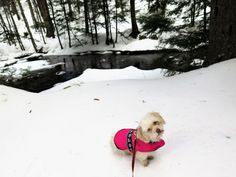 Pet friendly travel in New Hampshire.  Waterville Valley in NH has several dog friendly spots.  Take your dog for a long walk on the beautiful cross country ski trail that allows dogs!