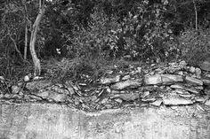 Soil profile - Eckrant cobbly clay