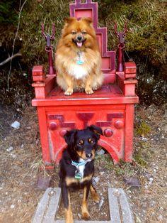 Hunde Foto: Petra und Kenny und Mila - Meine 2 Süßen 😍.png Hier Dein Bild hochladen: http://ichliebehunde.com/hund-des-tages  #hund #hunde #hundebild #hundebilder #dog #dogs #dogfun  #dogpic #dogpictures