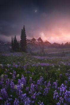 Leading The Way, Mazama Ridge, Mount Rainier National Park, by Ryan Dyar, on 500px.