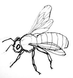 Free for personal use Flying Bee Drawing of your choice Animal Sketches, Animal Drawings, Art Drawings, Bugs Drawing, Drawing Sketches, Bee Painting, Painting & Drawing, Honey Bee Drawing, Bee Sketch