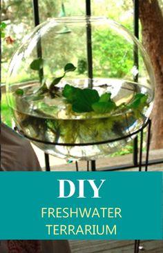 Voici une idée tout à fait unique de terrarium d'eau douce à faire chez soi. En récoltant quelques coquillages sur la plage ou tout simplement avec deux trois idées dans la tête, fabriquez un terrarium d'eau douce de A à Z. Les terrarium d'eau douce sont différents des terrariums fait de plantes d'air ou de terre mais leur conception est tout aussi facile, voir plus facile. Mettez en valeur des …