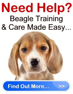 Beagle training hints and tips