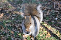 Quirrel, Battery Park