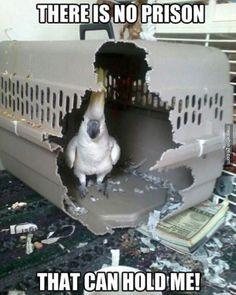 Bird escapes Alcatraz… sort of