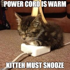 A warm kitteh is happy kitteh. | POWER CORD IS WARM KITTEH MUST SNOOZE | image tagged in happy kitty | made w/ Imgflip meme maker