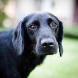 "Hemorrhagic Gastroenteritis in Dogs - Bloody Diarrhea in Dogs   petMD ""raspberry jam"""