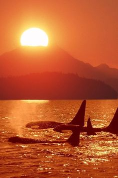 Orka pod...Ocean Life - Explore the World with Travel Nerd Nici, one Country at a Time. http://TravelNerdNici.com
