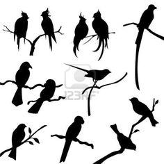 bird silhouettes Stock Photo