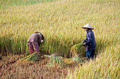 Vĩnh Diện (Vietnam)