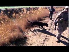 Hero Dog Awards | American Humane Association