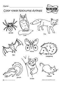 srp12 Nocturnal Animals coloring sheet