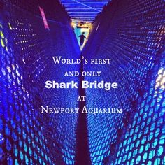 The World's first and only Shark Bridge at Newport Aquarium.