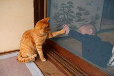 Cat Window, Psy, Cats And Kittens, Baby Kids, Babies, Bird, Children, Sweet, Funny