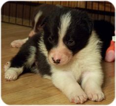 How To Housebreak A Puppy~ Great reference for puppy age and crating time frames