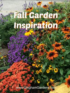 Stop by Gingham Gardens for inspiration for your Fall Garden, includes fall perennials and fall flowers, plus lots of fall outdoor display ideas. Fall Perennials, Flowers Perennials, Planting Flowers, Growing Flowers, Fall Containers, Fall Planters, Outdoor Flowers, Garden Pictures, Autumn Garden