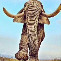Protect the elephants