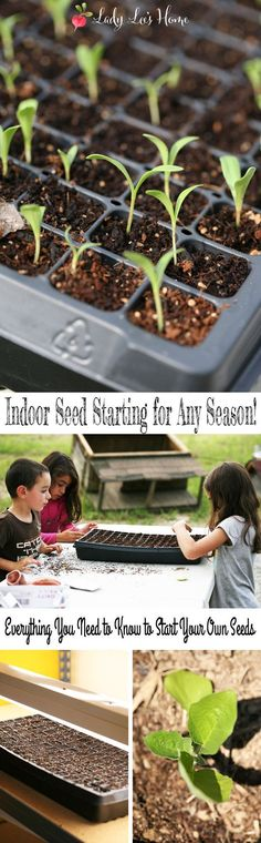 If you thought that indoor seed starting is saved only for late winter or early spring, you are wrong. Let me show you how you can start seeds indoors all season for a better garden!