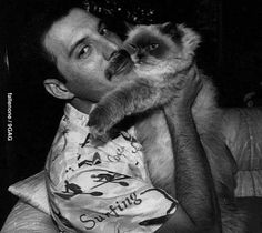 Freddie Mercury was a British singer-songwriter and producer. As the frontman of Queen, Freddie Mercury was one of the most tale. Queen Freddie Mercury, Celebrities With Cats, Celebs, Cute Kittens, Cats And Kittens, Siamese Cats, Crazy Cat Lady, Crazy Cats, I Love Cats