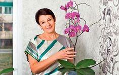 asa ingrijesti corect o orhidee.