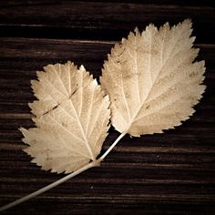 Leaves Autumn Brown