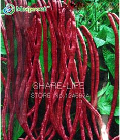 Red Bean Seeds Chinese Vegetable, DIY Home Garden Bonsai Plant Seeds - 20PCS