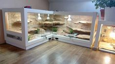 Best Images Reptile Terrarium vivarium Tips There is no doubt that using a pet would bring lots of fulfillment to help a person's life. When the majority . Bearded Dragon Vivarium, Bearded Dragon Enclosure, Bearded Dragon Terrarium, Bearded Dragon Habitat, Bearded Dragon Cage, Reptile Cage, Reptile Habitat, Reptile House, Reptile Room