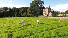 Visiting Kellie Castle Garden in Scotland | Europe a la Carte Travel Blog