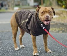 Canine Carhartt Coat for Your Pal! - http://www.instructables.com/id/Canine-Carhartt-Coat-for-Your-Pal/