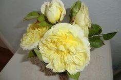 cottonreel  David Austin roses named Pilgrim