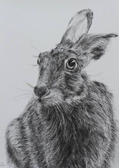 "Saatchi Art Artist: Jill Meager; Charcoal 2014 Drawing ""Hare 2"""