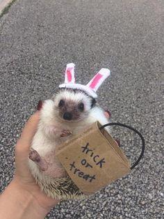 Pet Hedgehog... 19 Things Hedgehogs Are Not