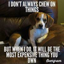 Beagle philosophy