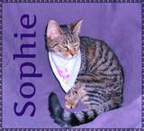 Sophie is a tiny tabby with a big personality! This little girl loves to play and has a good time with her foster brothers and sisters and she loves to have her back scratched and chin rubbed. Sophie needs a home with lots of things happening and lots of other cats to play with. She is a ball of energy! If you would like to adopt Sophie, please visit appalachianspca.org and fill out an adoption application today or email appalachiankitties@gmail.com :)