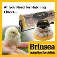 Duck or Chicken incubation troubleshooting guide
