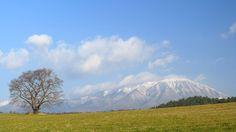 初冬の小岩井農場 一本桜(雫石町)と岩手山 2014