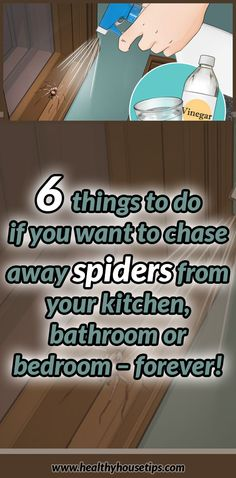 6 things to do if you want to chase away spiders from your kitchen, bathroom or bedroom – forever!