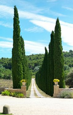 Rows of cypress trees, Provence, France. Landscape Architecture, Landscape Design, Garden Design, Outdoor Gardens, Kew Gardens, Provence France, Provence Garden, Cypress Trees, French Countryside