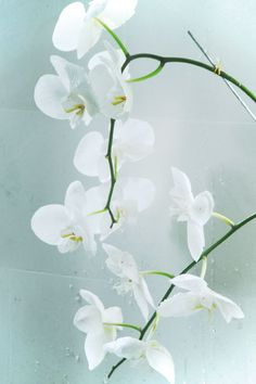 Beautiful white orchids:  the delicate, exotic and graceful orchid represents love, luxury, beauty and strength.