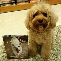 Hi Furriends! If you could spare a little a contribution this festive season consider getting a calendar from Gentle Paws shelter!   Each calendar is S$10 plus S$1.50 for postage. 100% of the proceeds go to the wellbeing of the furries at the shelter. Get a copy from our webstore or directly from the folks at Gentle Paws!   #gentlepaws #dogshelter #charity #dogs #spiritofgiving #sgpetlovers #sgpets #sgdogs #petsmagazinesg #clubpetsmag #ilovemydog #magasinmiyabi
