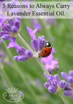 5 Reasons to Always Carry Lavender EO
