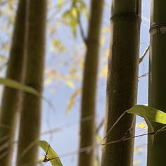 #bamboo #nature Bamboo, Candles, Outdoor Decor, Nature, Home Decor, Homemade Home Decor, The Great Outdoors, Decoration Home, Candle