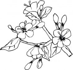 Flower Coloring Pages on Flowers Coloring Pages