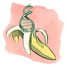 Musa convertida en ADN