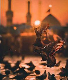 Karbala Photos, Karbala Pictures, Islamic Images, Islamic Pictures, Islamic Art, Islamic Videos, Ya Hussain Wallpaper, Imam Hussain Wallpapers, Islamic Wallpaper Hd