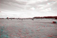 Field in Normandy in 3D. Use red/blue glasses.