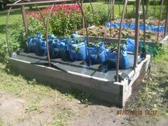 This is Incredible! The Self Watering Grow Bag Grow System! You got to s...