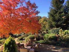 Duckhorn Winery #Duckhorn #wine tasting #Napa Valley #California #autumn