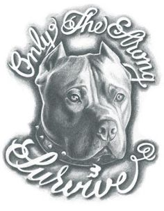 Pitbull - Only the strong survive Tattoo- Pitbull Tattoo, Pitbull Drawing, Bull Tattoos, Tattoos Skull, Tatoos, Prison Drawings, Cool Car Drawings, Dark Art Drawings, Tattoo Design Drawings