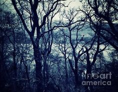 A silhouette of trees at the Lochside at Loch Lomond I used a blue filter to add atmosphere in art to the picture taken at dawn the blue tones were already there, I just expanded on them with a touch of blue haze, a very peaceful scene.
